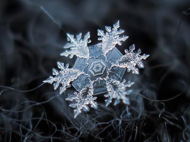 snowflakes-macro-photo13